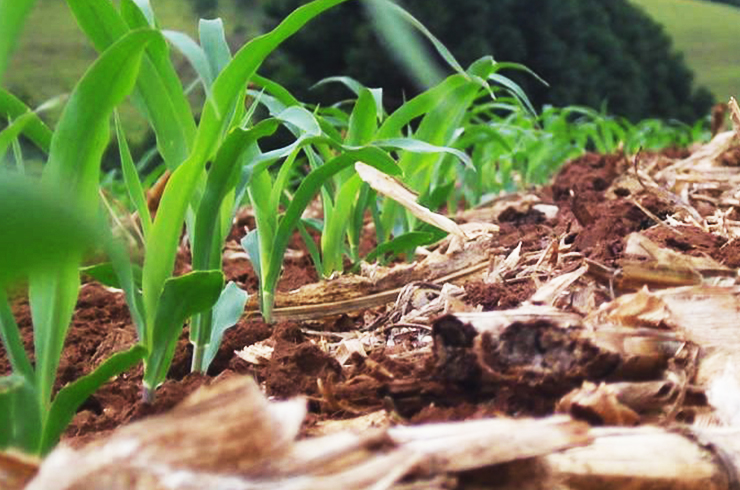 Impacto do Sistema Plantio Direto na agricultura brasileira