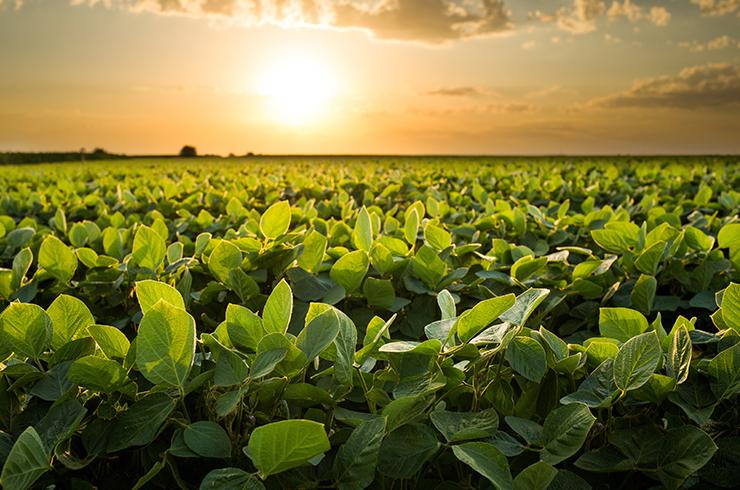 Índios de Mato Grosso se tornam produtores de soja