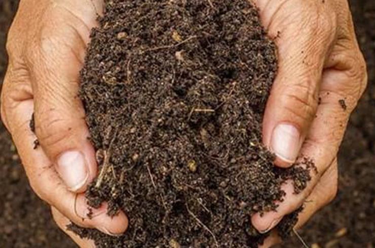 SAIBA COMO OS MICRORGANISMOS INFLUENCIAM O SOLO NA AGRICULTURA