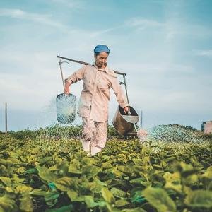GLIFOSATO: Mitos e verdades sobre um dos agrotóxicos mais usados do mundo.