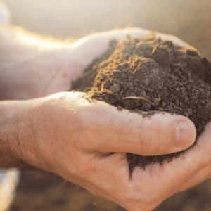 OS CUIDADOS NO PLANTIO QUE AJUDAM A ALCANÇAR BONS RESULTADOS NA COLHEITA