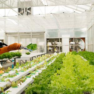 Projetos utilizam inteligência artificial na agricultura
