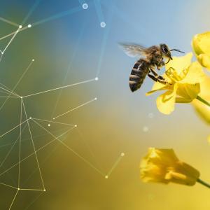 Robô é a solução para evitar a extinção das abelhas